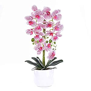 Livilan Large Dual Stem Silk Phalaenopsis Arrangements, Realistic Orchid in White Ceramic Vase Artificial flower for Decoration, Rose 23