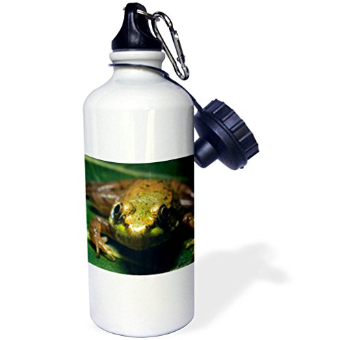 3dRose Danita Delimont - Frogs - Cricket Frog, Acris crepitans, Alberta, Canada - 21 oz Sports Water Bottle (wb_257441_1) by 3dRose