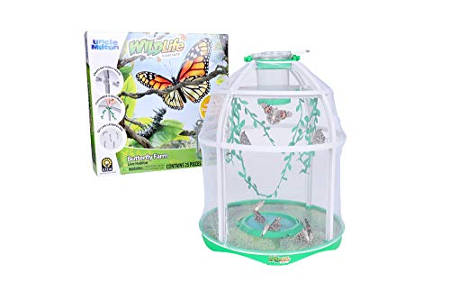 Uncle Milton Butterfly Farm Live Habitat - Observe Butterfly Lifecycle in Garden - Includes Voucher to Redeem for Caterpillars