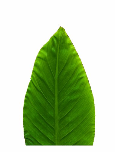 EuroQuest Imports Banana Parchment Leaves product image