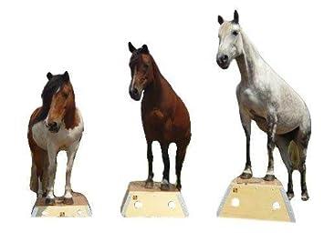Time4horses pferd pferde podest pferdepodest bodenarbeit zirkus time4horses pferd pferde podest pferdepodest bodenarbeit zirkus podest zirkuspodest altavistaventures Images