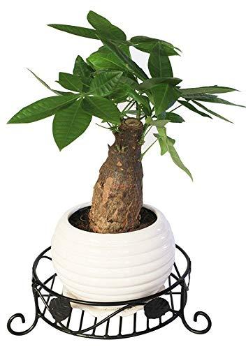 Amazoncom Black Metal Garden Flower Pot Holders Wrought Iron