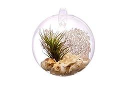Hinterland Trading Living Wall Sea Fan Glass Terrarium, 7 Inch