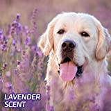 Hartz Home Protection Odor Eliminating Scented Dog
