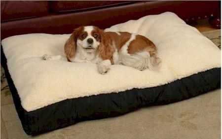 Snoozer Rectangle Pillow Pet Bed, Cream Snoozer with Fur, Medium, Red (Pet Medium Paisley Beds)