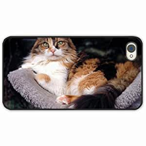 iPhone 4 4S Black Hardshell Case furry lying Desin Images Protector Back Cover