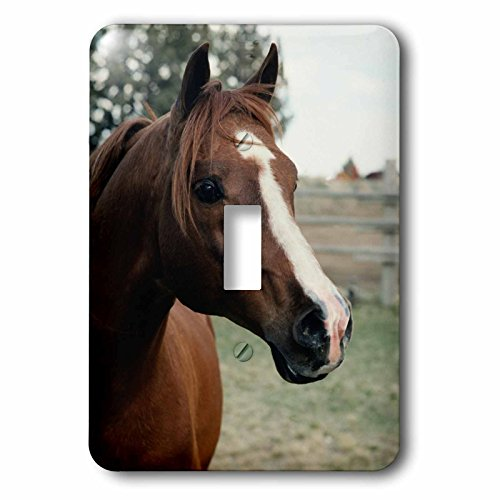3dRose TDSwhite – Horse Equine Photos - Arabian Horse Pasture - Light Switch Covers - single toggle switch (lsp_285452_1) by 3dRose