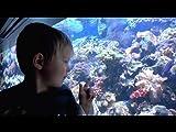 Little Boy's New England Aquarium Adventure