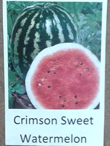 Go Garden 25 Seeds: Crimson Sweet Watermelon Seed, Garden Seed (10,25,50 Seeds Or 1 Oz. Pkt) ()