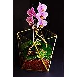 Maceta Terrarium Caja de Hadas Florero Geométrico Decorativa Suculentas Orquídeas Terrarium Centro de Mesa Vidrio Dorado (26cm Altura)