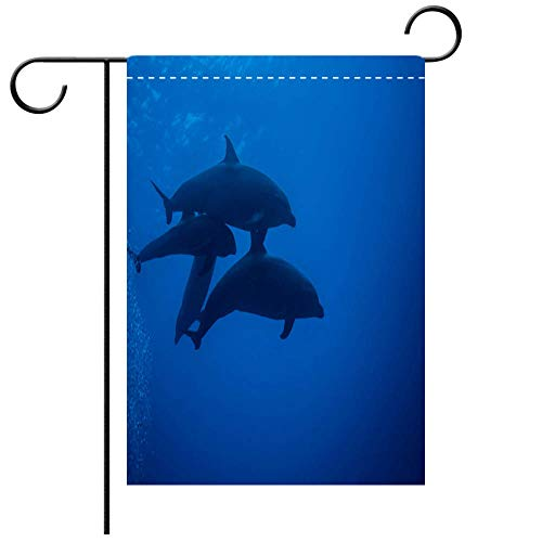 French Calf Vinyl - BEICICI Garden Flag Double Sided Decorative Flags Adopted Melon Headed Whale Calf and Dolphin Family Diving in French Polynesia Best for Party Yard and Home Outdoor Decor