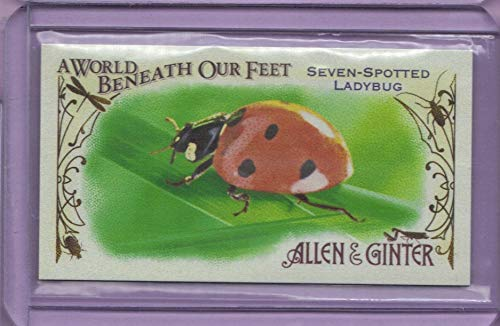 (2015 Topps Allen and Ginter Mini A World Beneath Our Feet #BUG5 Seven-Spotted Ladybug)