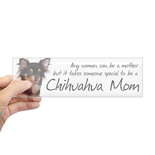 Tri Chihuahua - 9