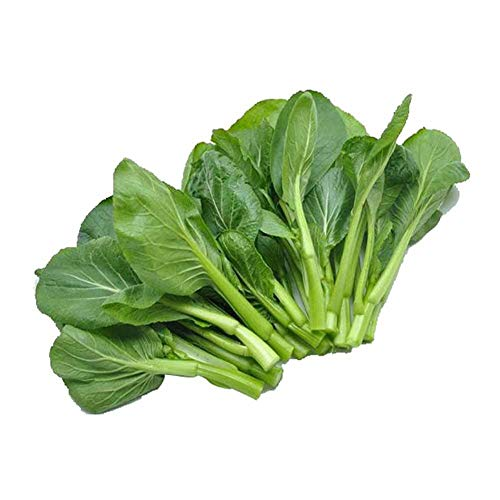 Choy Sum Seeds 20g About 5000+ Brassica campe Garden Vegetable Big White Green Red Organic Chinese Flowering Cabbage for Planting Outside Door for Cooking Dish Soup Taste(Green Cabbage Seeds)