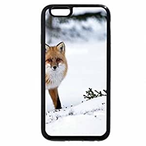 iPhone 6S / iPhone 6 Case (Black) Pretty fox in the snow