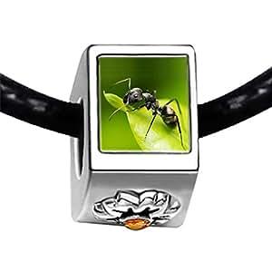 Chicforest Silver Plated Foraging Ant Photo Topaz Crystal November Birthstone Flower Charm Beads Fit Pandora Chamilia Biagi Charm Bracelet
