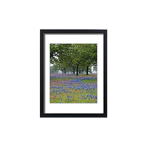 Media Storehouse Framed 24x18 Print of Texas, Texas Hill Country, Texas Paintbrush and Bluebonnets (5788472) by Media Storehouse (Image #3)