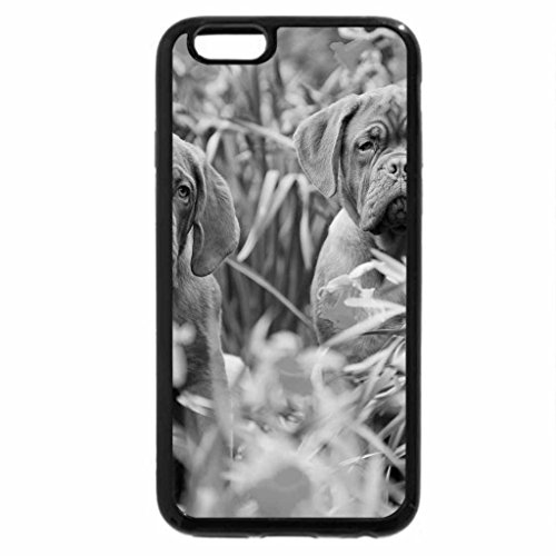 iPhone 6S Plus Case, iPhone 6 Plus Case (Black & White) - Two Dogs Mastiffs and daffodils