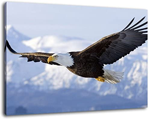 huge XXL images completely and completely framed with stretcher covered painting on canvas cheaper than painting or picture canvas picture no posters or pos Eagle flying over snow-capped mountains art print on wall picture with frame Size: 100x70 cm