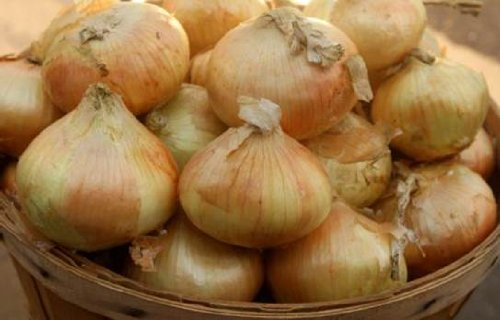 Sweet 'Candy' Onions from Organic Mountain Farms (20 Lbs.)