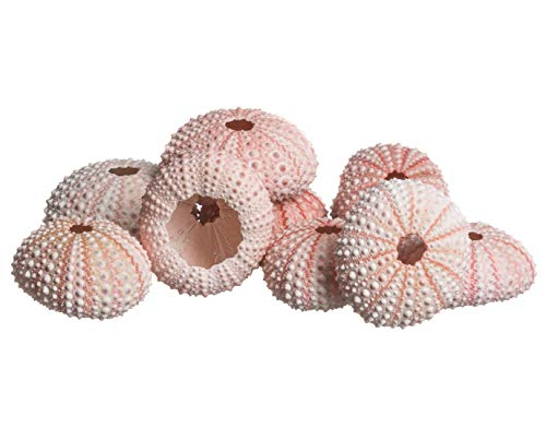 Nautical Crush Trading Sea Urchin |10 Pink Sea Urchin Shell |10 Pink Sea Urchin Shells for Craft and Decor TM| Plus Free Nautical Ebook by Joseph Rains