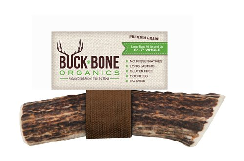 41iJnYdtHBL - Buck Bone Organics Elk Antler Dog Chews by All Natural Healthy Chew For Large Dogs, From Montana, Made in the USA - LARGE
