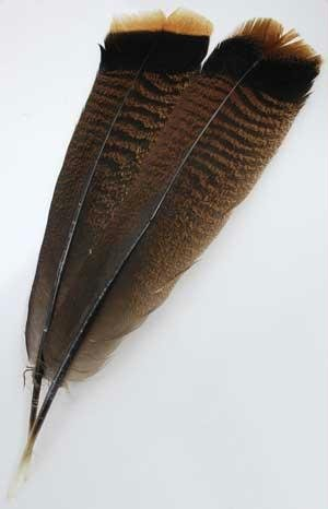 (Bronze Turkey Tail Feather)