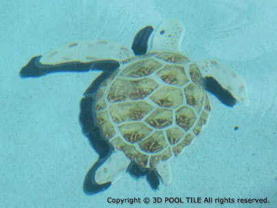 Amazon.com : Medium Loggerhead Turtle Pool Mosaic with ...