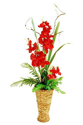 - LCG Florals 15F162 Phalaenopsis Orchid Garden with Phoenix Palms, Empress Leafs & Air Roots In A Tapered Basket, 47
