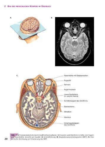 Handbuch Anatomie: Bau und Funktion des menschlichen Körpers: Amazon ...