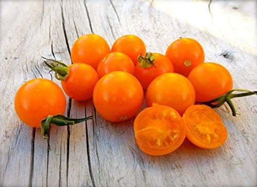 Sungold Select Tomato Seeds (20 Seed Pack) (Seeds Sungold Tomato)