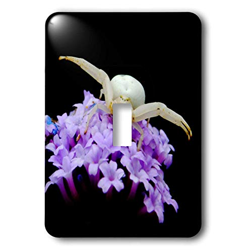 3dRose Russ Billington Photography - White Crab Spider Waiting for Prey with Legs Outstretched - Light Switch Covers - single toggle switch (lsp_291544_1)