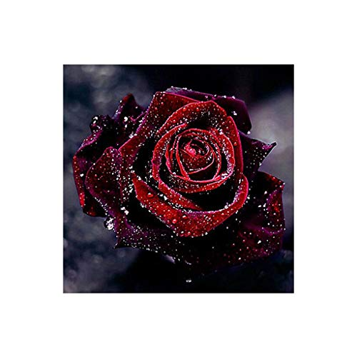 DDLmax 5D DIY Diamond Painting Red Rose Wall Sticker 3D Diamond Mosaic Cross Stitch Embroidery Paintings Pictures Arts Craft ()