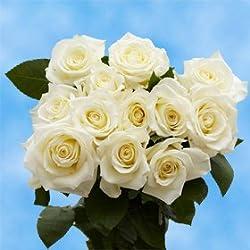 1 Dozen White Roses | Wondrous Charming! Great for Valentine's Day