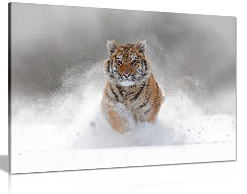 (Siberian Tiger Running In Snow Wildlife Nature Canvas Wall Art Picture Print (36x24in))