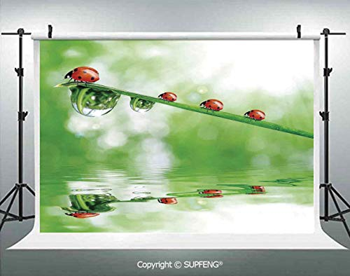 Background Ladybugs on A Stem Over The Water Striped Animals Fresh Environmental Life Image 3D Backdrops for Interior Decoration Photo Studio Props