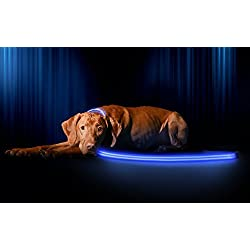 Illumiseen LED Dog Leash - USB Rechargeable - Your Dog Will Be More Visible & Safe - 6 Colors (Red, Blue, Green, Pink, Orange & Yellow) - Perfect To Use with Our Matching Collar (6 Feet, Blue)