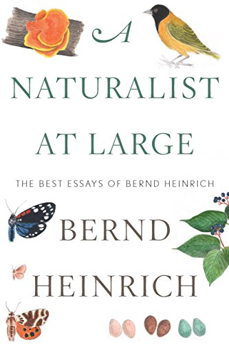 Amazoncom A Naturalist At Large The Best Essays Of Bernd Heinrich  A Naturalist At Large The Best Essays Of Bernd Heinrich By Heinrich Bernd
