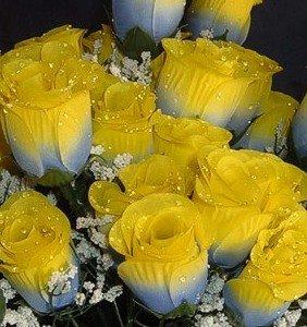 Amazon igc 84 blueyellow silk rose flowers wraindrops igc 84 blueyellow silk rose flowers wraindrops wedding flowers bridal mightylinksfo