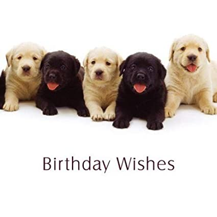 Black Yellow Labrador Puppy Dogs Birthday Wishes Card Amazoncouk Kitchen Home