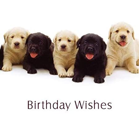 Black Yellow Labrador Puppy Dogs QuotBirthday Wishesquot