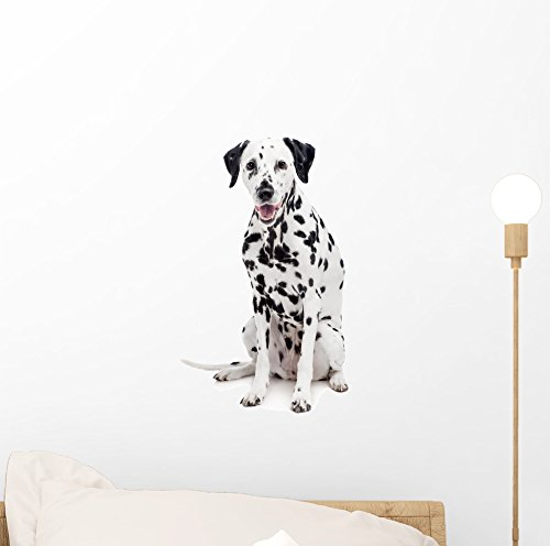 Playful Dalmatian (Beauty Dalmatian Dog White Wall Decal by Wallmonkeys Peel and Stick Animal Graphics (12 in H x 8 in W) WM21394)