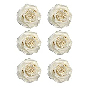 CAN_Deal Preserved Roses | Natural Roses That Last for Months - Immortal White Roses | Use Instead of Artificial Roses for Arrangements | Preserved Flowers for Gifts | Box of 6 White Rose Heads 74