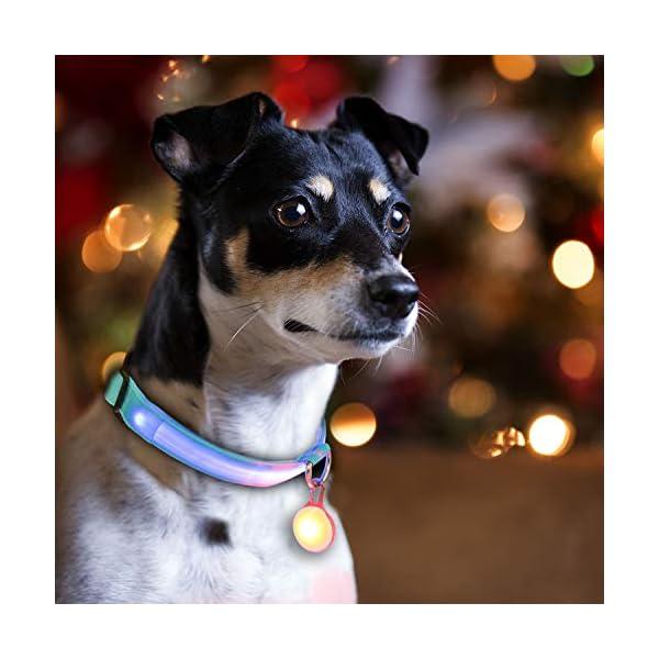 3 Modos Intermitente Luces Bater/ía Incluida con 6 Pilas de Repuesto Collar de Perro con Luz LED Collar de Seguridad LED para Perros AJOXEL 6 PCS Luz para Perros LED con Collar Perro