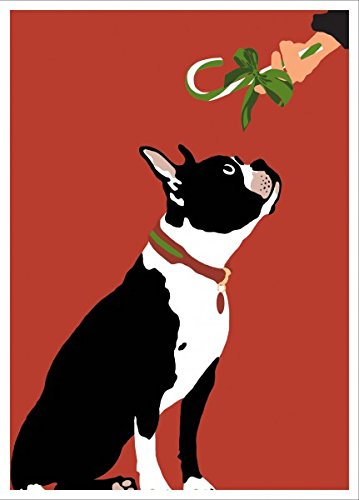 boston terrier gets candy cane boxed christmas holiday greeting cards