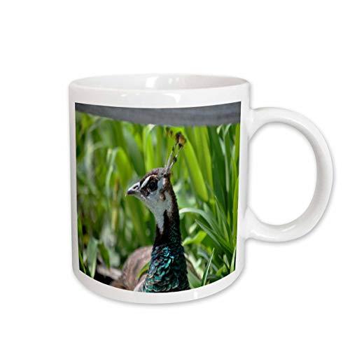 (3dRose Dreamscapes by Leslie - Birds - Peahen resting in the sunshine - 15oz Mug (mug_314273_2))