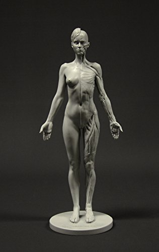 Female Anatomy Figure: 10.5-inch Anatomical Reference for Artists ()