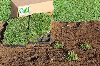 Gulf Kist 'Classic' St Augustine Grass Plugs - 36 Count by Gulf Kist (Image #5)