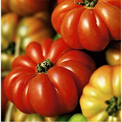 David's Garden Seeds Tomato Slicing Costoluto Genovese SL6384 (Red) 50 Non-GMO, Heirloom Seeds : Garden & Outdoor