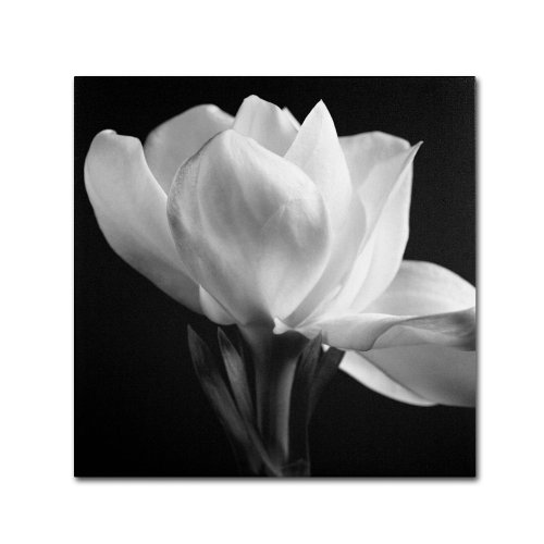 Gardenia  by Michael Harrison, 24 by 24-Inch Canvas Wall (Michael Floral Print)